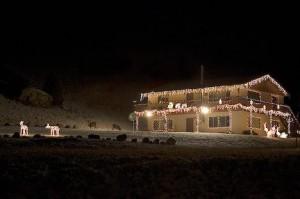 Christmas Light Display Mule Deer Yellowstone National Park