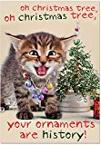 B1978 Box Set of 12 your ornaments are histor Unique Funny Christmas Cards with Envelopes
